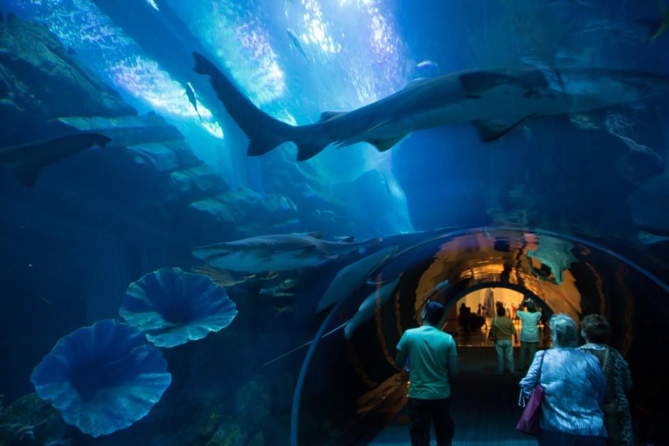 dubai-aquarium3