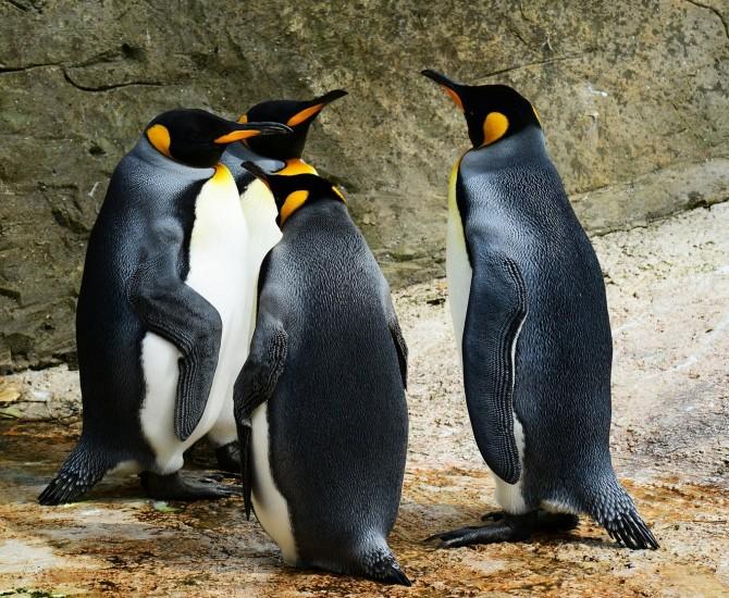 Ontmoet de pinguïns